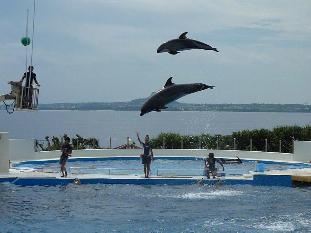Churaumi Dolphin