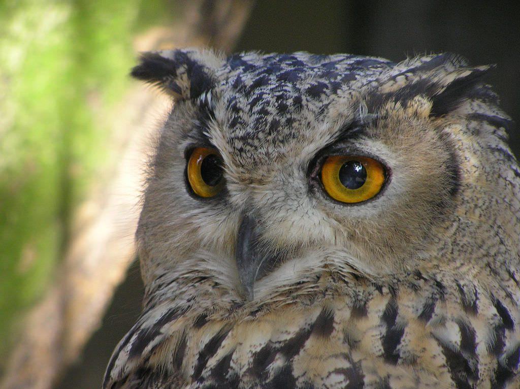 Zen owl. ;-)
