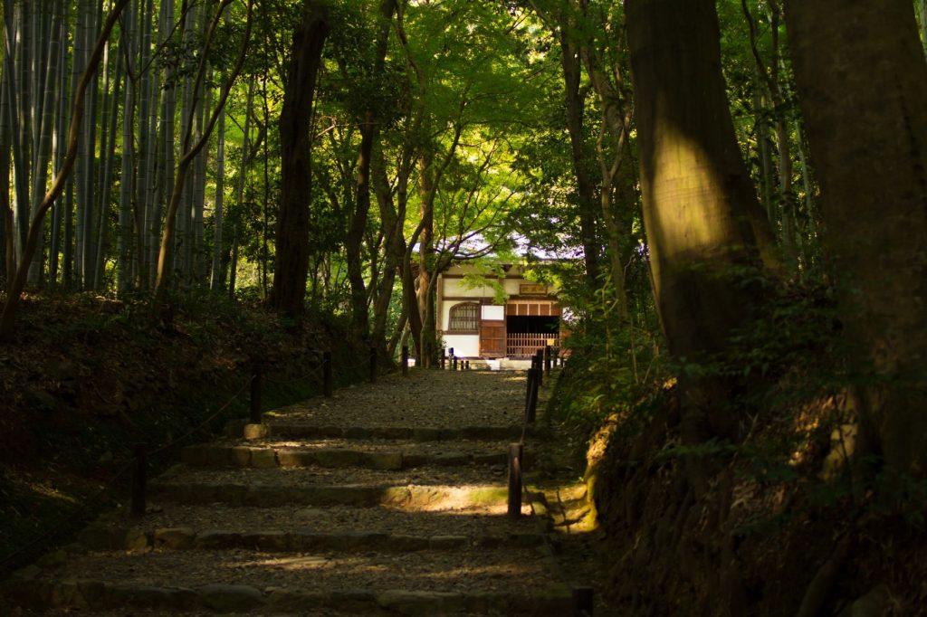 京都 地蔵院(jizo-in)