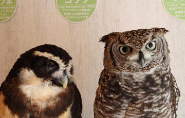 Owl Cafe 3