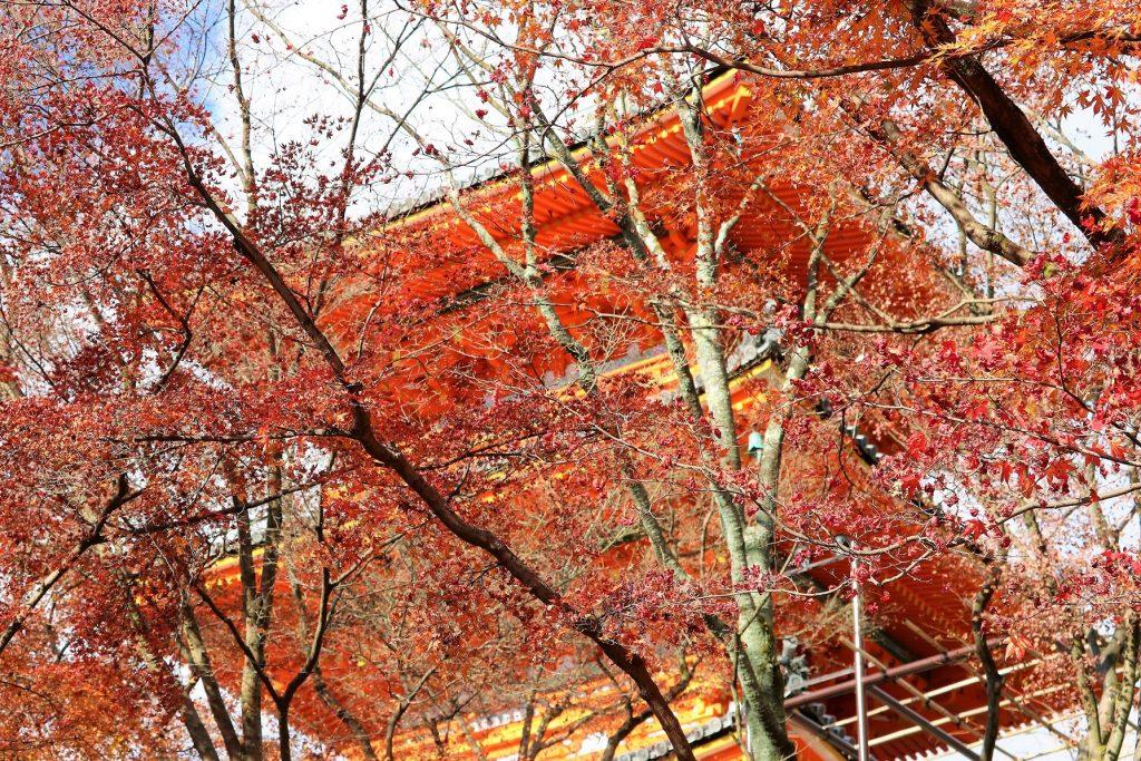 紅葉の向こうの三重塔
