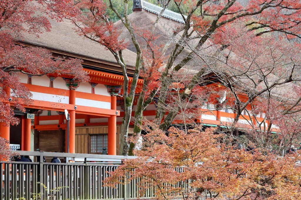紅葉に彩られた清水寺の阿弥陀堂(左)と奥の院(右)