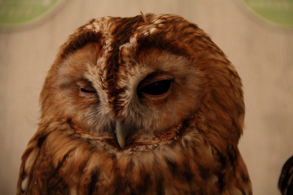 Owl Cafe 1