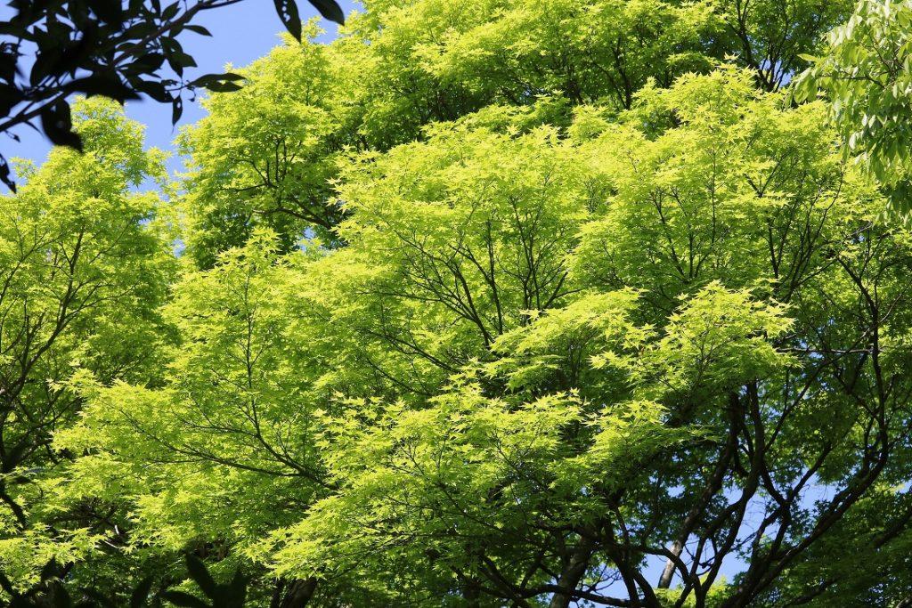 若草山の色鮮やかな新緑
