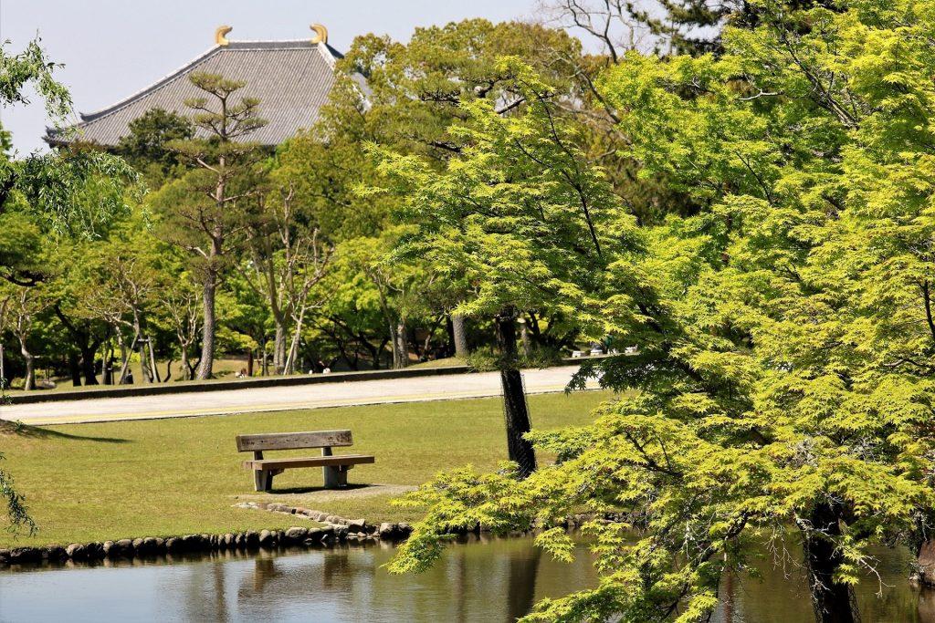 奈良公園内「浮雲園地」付近。向こうに東大寺大仏殿