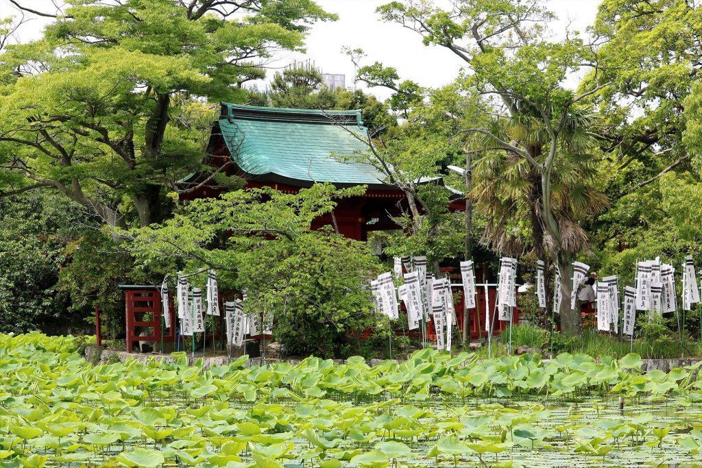白旗神社付近から眺める旗上辨戝天と源平池