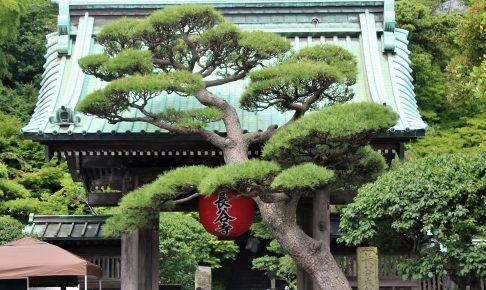赤い提灯と「門かぶりの松」が迎える長谷寺の山門