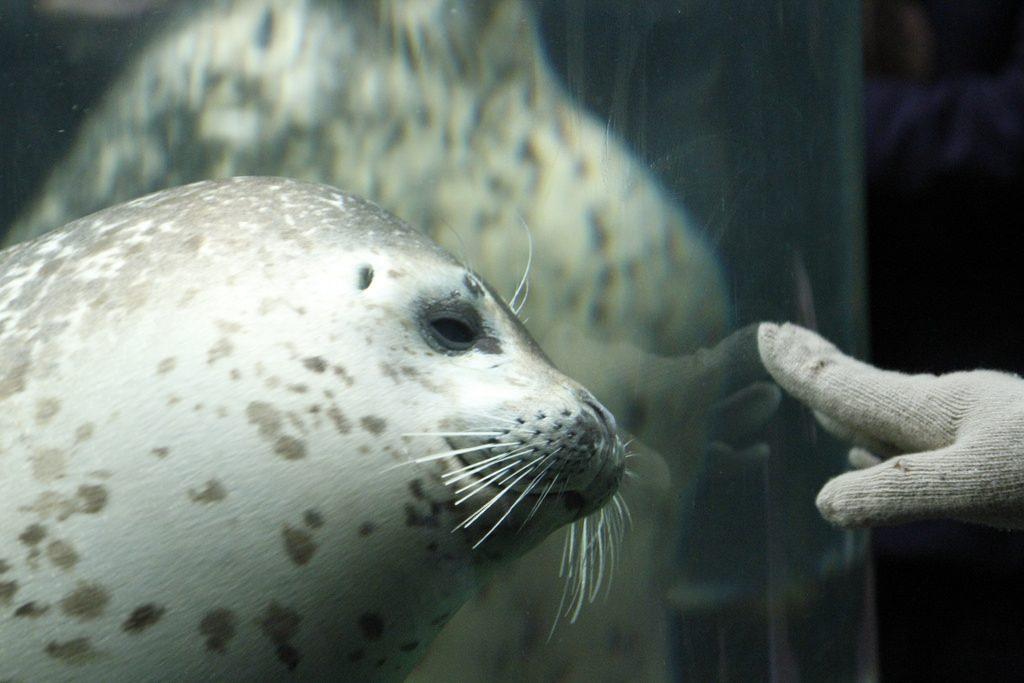 2010.01.29 蜜月DAY9-旭山動物園