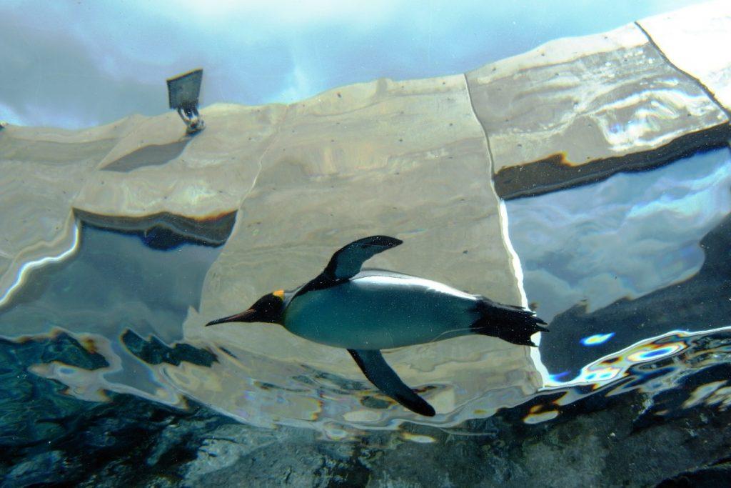 空飛ぶ「ペンギン」