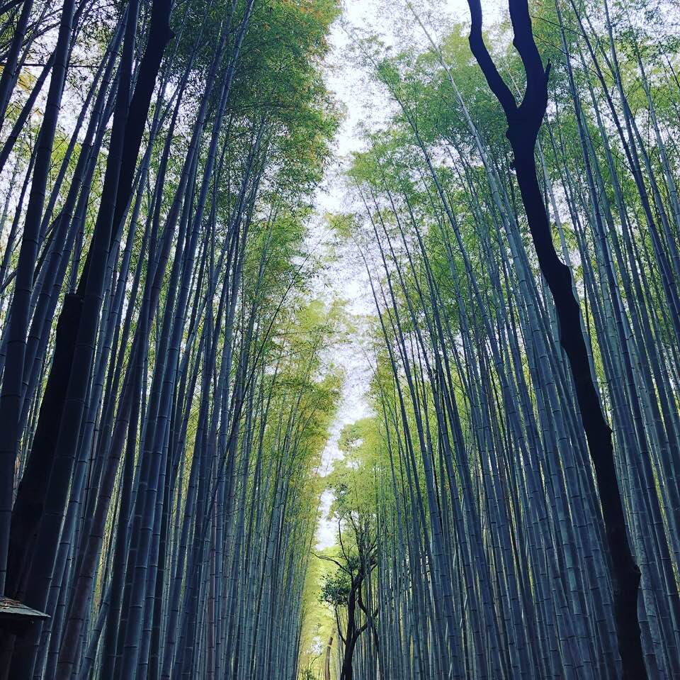 "Relax In The Bamboo Forest, ""Arashiyama"". Introducing A Famous Sightseeing Spot In Kyoto"