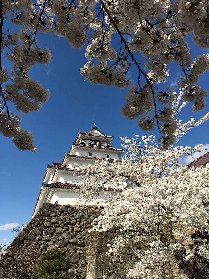 穴場の桜の名所! 神奈川「小田原一夜城 ヨロイヅカ・ファーム」周辺情報