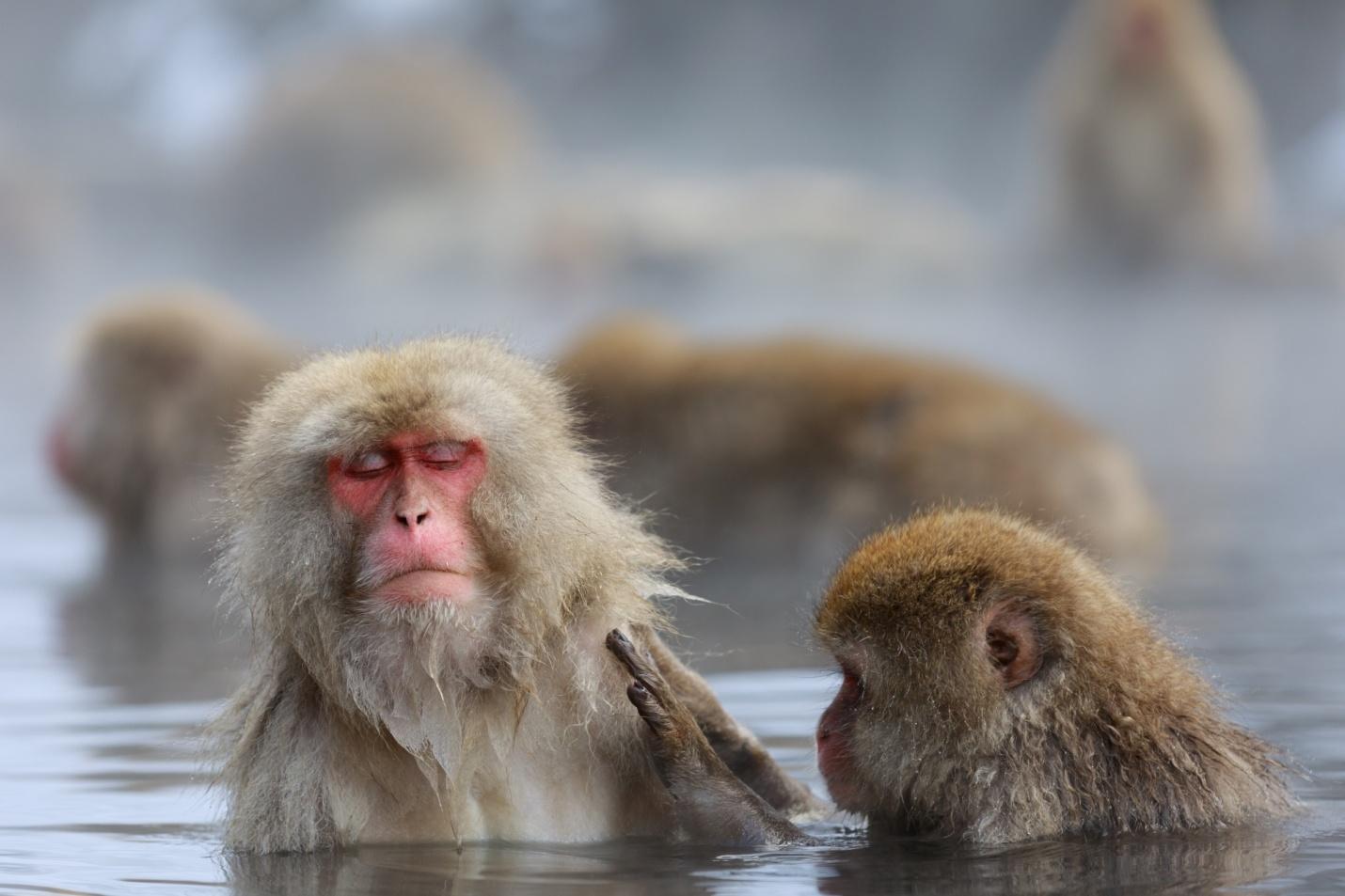 ようこそスノーモンキーパークへ!地獄谷野猿公苑と周辺を観光しよう!