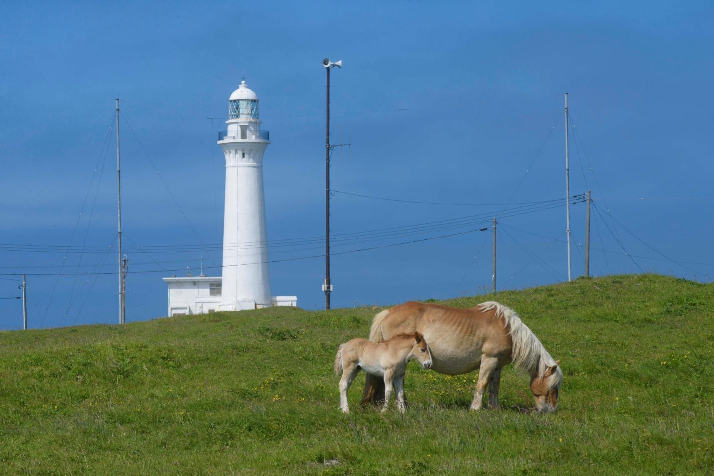 下北半島のおすすめ観光スポットを厳選!見どころはド迫力の豊かな自然